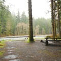 Campsite along Quinault River in Graves Creek Campground.- A Complete Guide to Camping in Olympic National Park