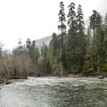 Quinault River at Graves Creek Campground.- Best Year-round Campgrounds in Washington