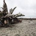 Sizable driftwood at La Push, First Beach.- Winter in Olympic National Park