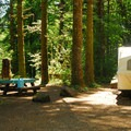 A forested campsite at Jones Creek Campground in Tillamook State Forest.- A Guide to Camping in Oregon