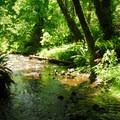 Jones Creek.- Saving Oregon's State Forests