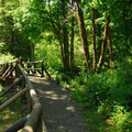 Wilson River Trail heading toward Tillamook Forest Center with a bridge over Jones Creek.- Saving Oregon's State Forests