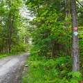 A gravel road is the trail most of the way up Belfry Mountain.- Adirondack Fire Tower Hikes