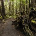 La Push, Second Beach: The 0.7-mile-long access trail for La Push, Second Beach.- 16 Best Hikes on the Washington Coast