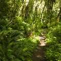 South Canyon Trail at Saint Edward State Park.- Adventure in the City: Seattle