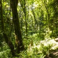 Hike along the South Canyon Trail at at Saint Edward State Park.- Adventure in the City: Seattle
