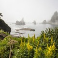 Shi Shi Beach Hike: Shi Shi Beach north end sea stacks.- 16 Best Hikes on the Washington Coast