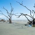 Boneyard Beach.- 3-Day Itinerary on South Carolina's Coast