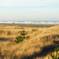 Beach access in Grayland Beach State Park Campground.- Best Year-round Campgrounds in Washington