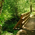 Bridge over Keenig Creek along the Wilson River Trail.- Saving Oregon's State Forests