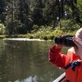 Birdwatching in Beaver Creek Natural Area.- Underused Gems of the Oregon Coast