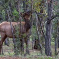 Wildlife love to hang out around Mather Campground.- Grand Canyon National Park