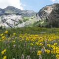 So many flowers on the Boards Fork Trail!- Wildflower Hikes Near Salt Lake City, Utah