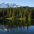 The forests of Mount Rainier (14,411 ft) and Reflection Lake.- American Rainforests You Need to See