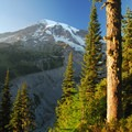 Mount Rainier (14,411 ft) from the Nisqually Vista Trail.- The Ultimate Washington National Parks Road Trip