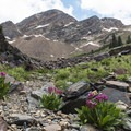 Sunrise Peak, also known as O'Sullivan's Peak, on the Broads Fork Trail.- Incredible Hikes for Alpine Wildflowers