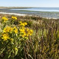 Dungeness Spit and Dungeness Bay.- Driving 101: An Unbeatable West Coast Road Trip