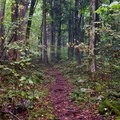 The trail to Mount Cammerer and campsite #35. - Guide To Camping In Great Smoky Mountain National Park