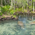 Manatees at Homosassa Springs Wildlife State Park.- The Ultimate Florida Road Trip Part I: Northwest Florida