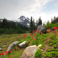 Magenta paintbrush (Castilleja parviflora) in Jefferson Park.- Oregon's 75 Best Day Hikes