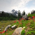 Magenta paintbrush (Castilleja parviflora) in Jefferson Park.- Oregon's Best Backpacking Trips