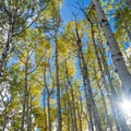 Autumn aspen groves along Inner Basin Trail.- Weekend Adventure Guide to Flagstaff, Arizona