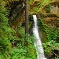 Camp Creek Falls.- 30 Must-See Waterfalls + Hikes in Washington