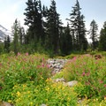 Jefferson Park.- Incredible Hikes for Alpine Wildflowers