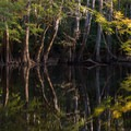 Cypress trees in Congaree National Park.- Underrated U.S. National Parks You Must See