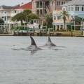 Dolphins in Town Creek near Beaufort, North Carolina.- 10 Summer Escapes to Cool Off in North Carolina