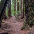 Skyline-to-the-Sea Trail.- Best Hikes in the Bay Area