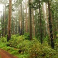 Hiking along the Ben Johnson Trail.- Marin's 10 Best Day Hikes