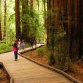 Muir Woods National Monument along the Main Trail.- Exploring America's National Monuments