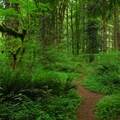 The trail connecting all of the walk-in campsites at Lazy Bend.- Your Go-To Guide for Camping Near Portland