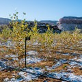 This experimental cottonwood garden is on Nature Conservancy land in the Indian Creek Corridor.- Bears Ears National Monument