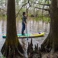 Admiring spring green on the cypress limbs in Sam Houston Jones State Park.- Paddler's Guide to Louisiana Swamps, Lakes + Bayous