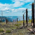 Scorched areas along Ken Patrick Trail appear desolate, but greenery is returning to the canyon rim.- Grand Canyon National Park