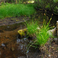 Lost Creek.- Camping Near Crater Lake National Park