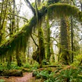 Maple Glade Rain Forest Trail.- America's Best National Parks for Fall Foliage and Wildlife