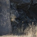 Salvaged petroglyphs at Columbia Hills Historical State Park.- Columbia River Gorge National Scenic Area