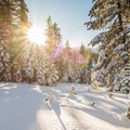 Sunrise on a snowshoe trail near Donner Summit.- From Summit to Sea: Catching California's Winter Waves
