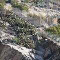 Chaparral vegetation high above Eaton Canyon.- 10 Best Waterfall Hikes Near Los Angeles