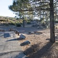 Typical campsite at Little Pines Campground.- Exploring the Angeles Crest Highway: A Complete Weekend Itinerary
