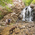 Heughs Canyon is dog friendly.- Heughs Canyon Trail