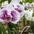 Orchid in the Brody Botanical Center at Huntington Gardens.- 15 Incredible Adventures in L.A.
