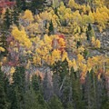 Mirror Lake Scenic Highway: There is a great mix of aspen, maple, oak, birch, pine and even some cottonwood trees.- The Best Leaf-Peeping Adventures for Fall Foliage