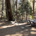 Typical campsite at Buckhorn Campground.- Exploring the Angeles Crest Highway: A Complete Weekend Itinerary