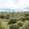 The desert expanse in Lost Dutchman State Park.- Superstition Mountain Hikes You Won't Want to Miss