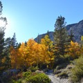 Fall colors along the Big Pine Creek North Fork Trail.- California's Best Backpacking Trips