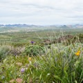 Jacob's Crosscut Trail is known for its wildflowers in the spring.- 6 Superstition Mountain Hikes You Won't Want to Miss